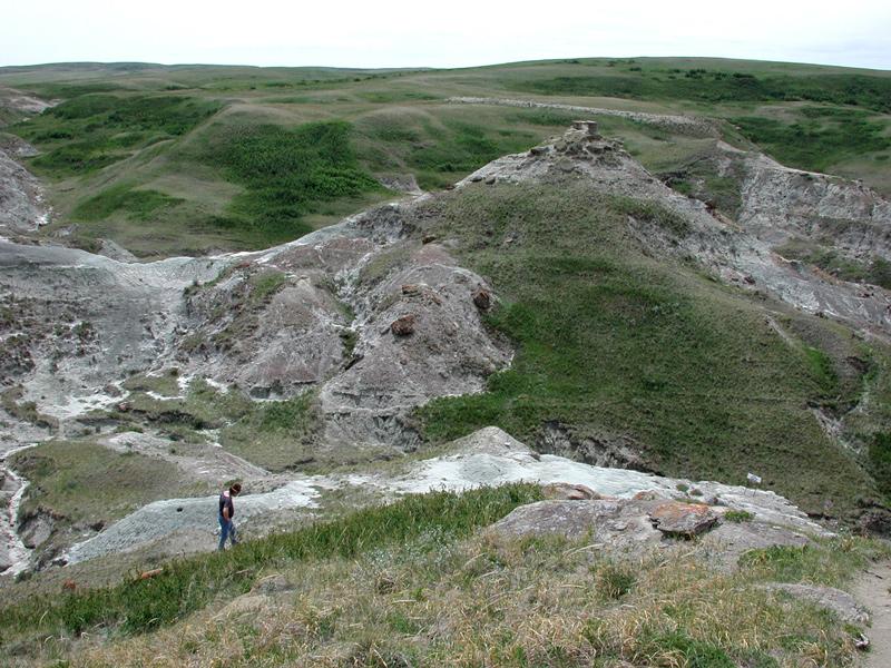 Dinosaur nesting site in Alberta, Canada.